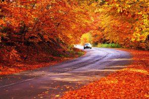 Høstkampanje Safe Driving